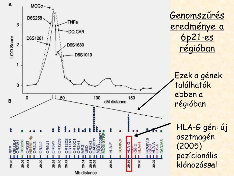 Genomszűrés eredménye a 6p21-es régióban