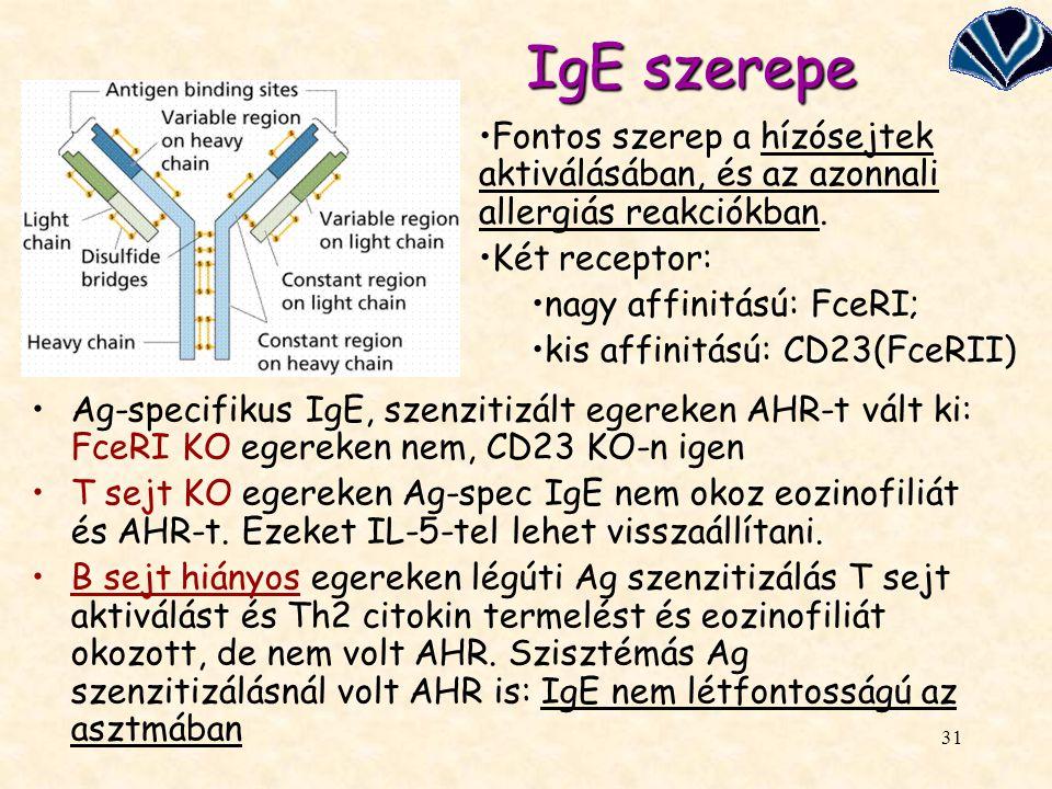 IgE szerepe Fontos szerep a hízósejtek aktiválásában, és az azonnali allergiás reakciókban. Két receptor: