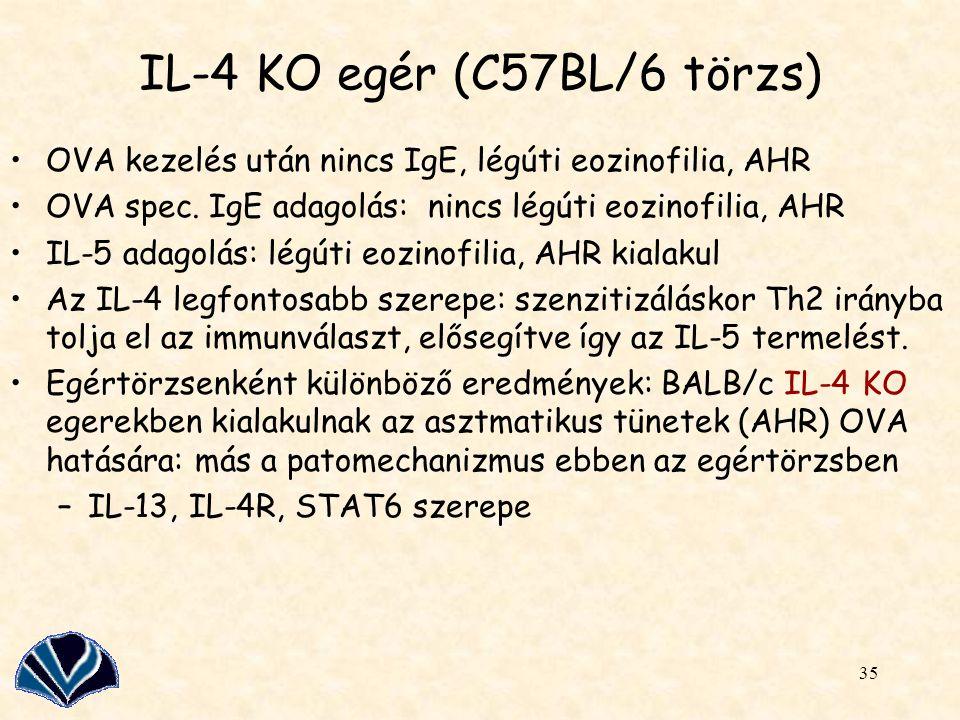 IL-4 KO egér (C57BL/6 törzs)