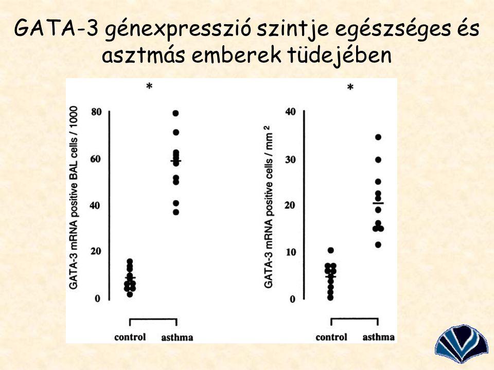 GATA-3 génexpresszió szintje egészséges és asztmás emberek tüdejében