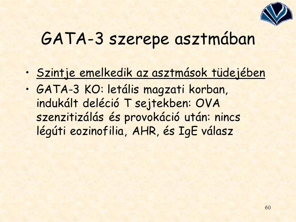 GATA-3 szerepe asztmában