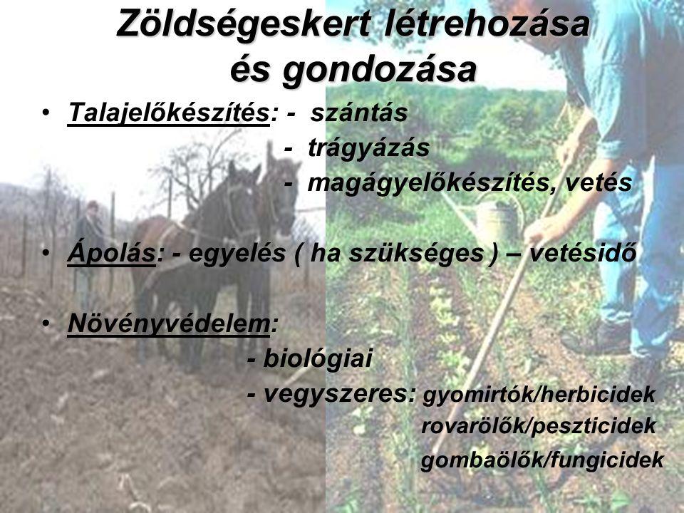 Zöldségeskert létrehozása és gondozása