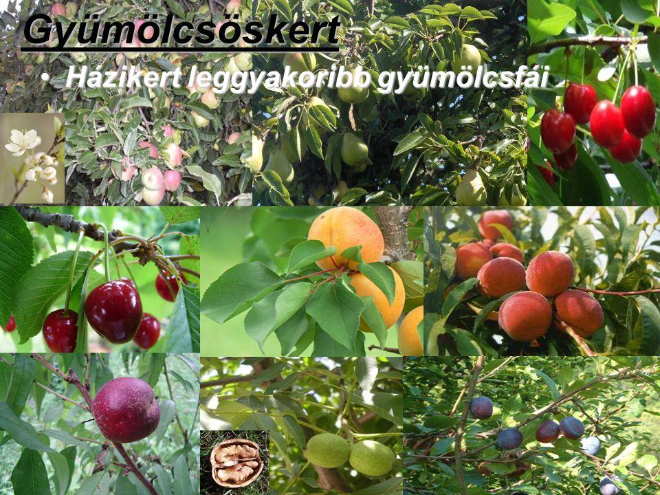 Gyümölcsöskert Házikert leggyakoribb gyümölcsfái