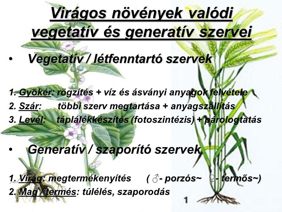 Virágos növények valódi vegetatív és generatív szervei