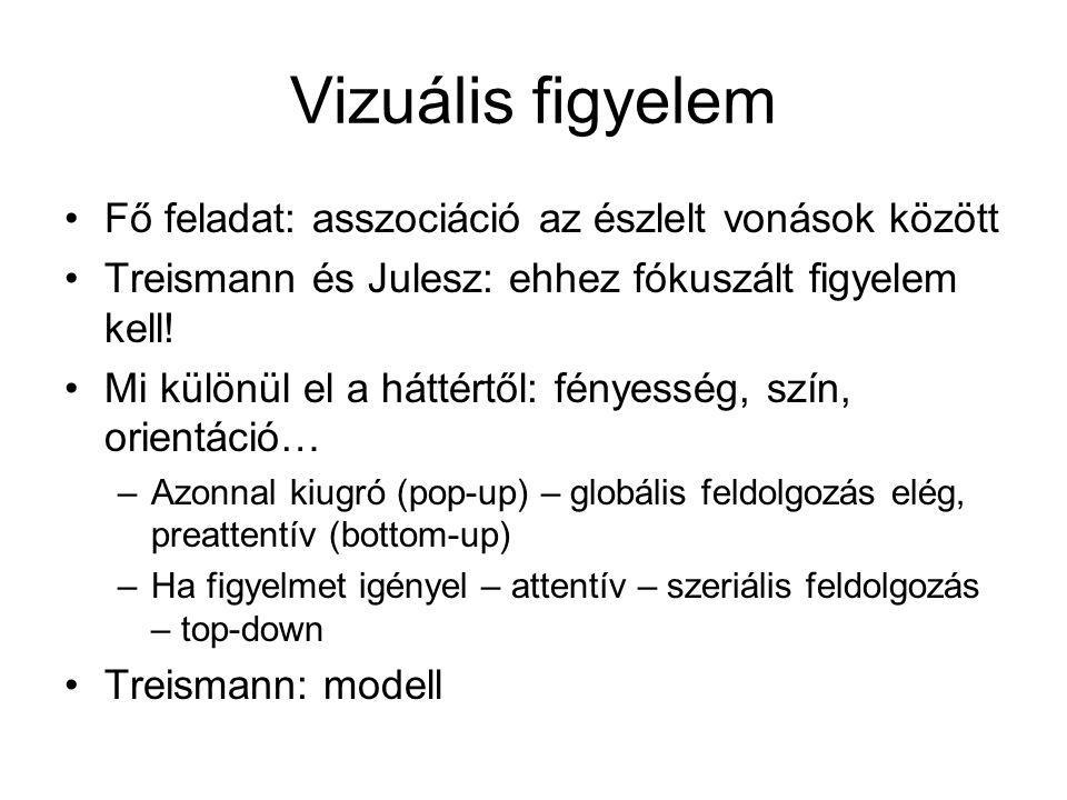 Vizuális figyelem Fő feladat: asszociáció az észlelt vonások között