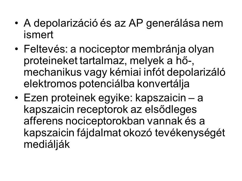A depolarizáció és az AP generálása nem ismert