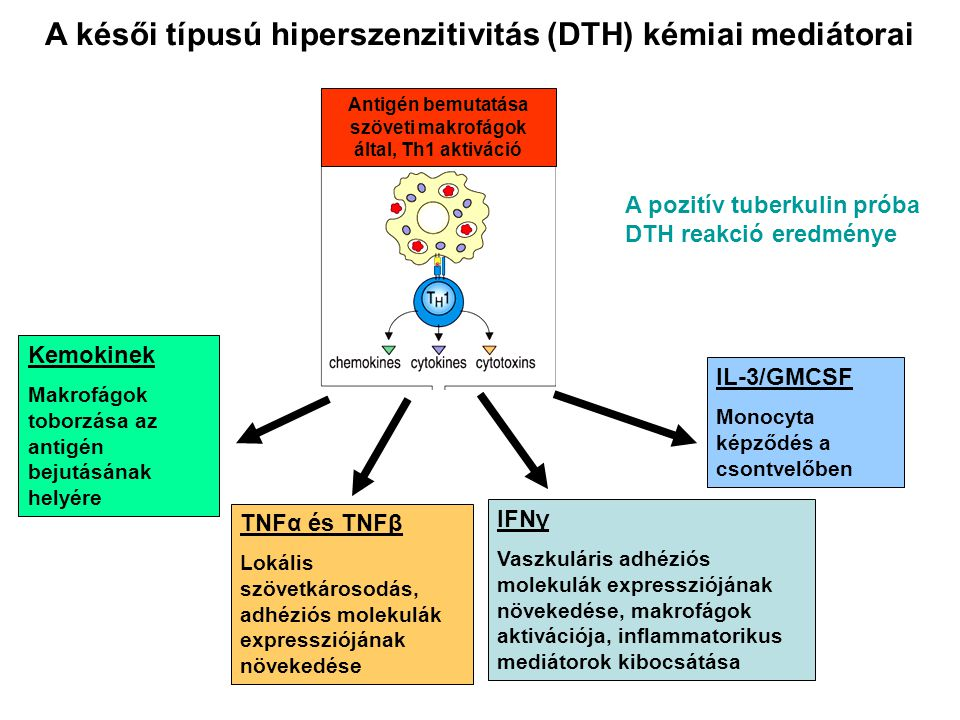 A késői típusú hiperszenzitivitás (DTH) kémiai mediátorai
