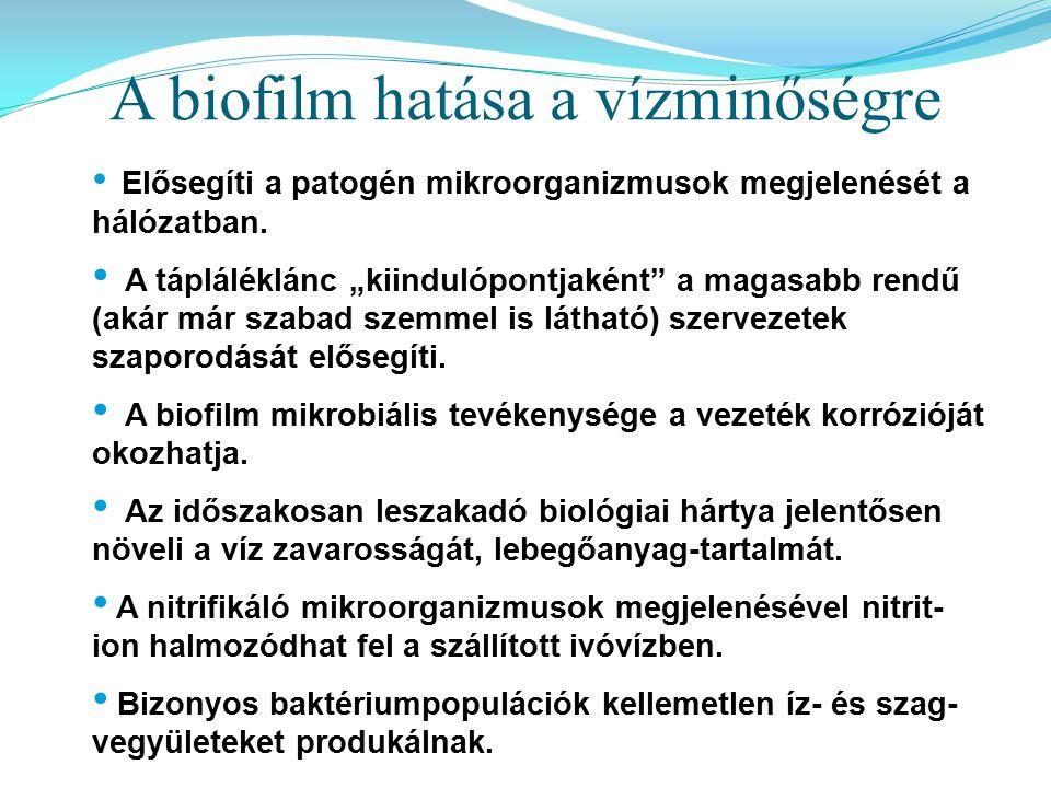 A biofilm hatása a vízminőségre