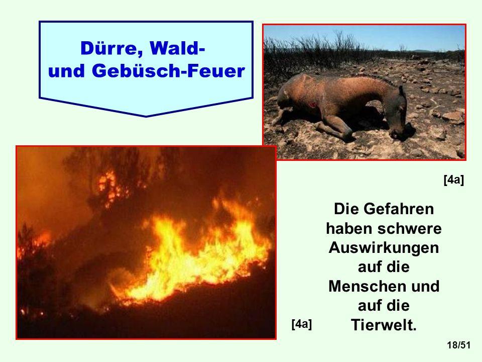 Dürre, Wald- und Gebüsch-Feuer