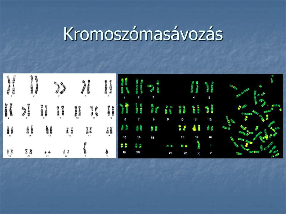 Kromoszómasávozás