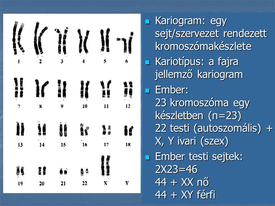 Kariogram: egy sejt/szervezet rendezett kromoszómakészlete