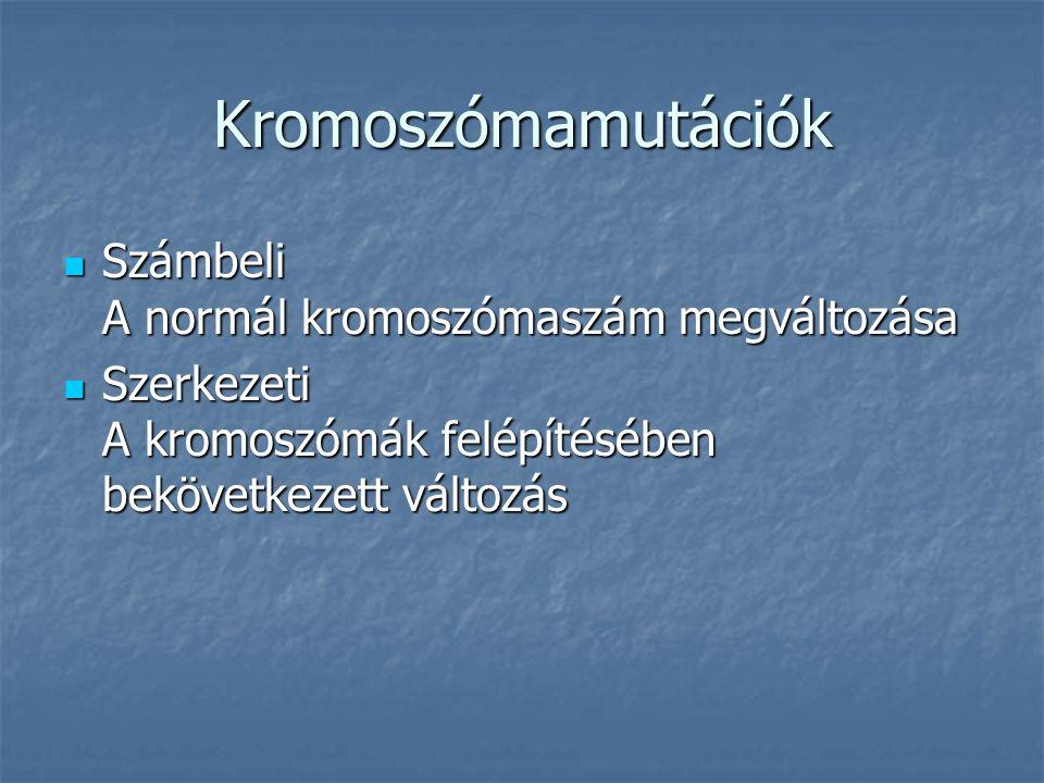 Kromoszómamutációk Számbeli A normál kromoszómaszám megváltozása