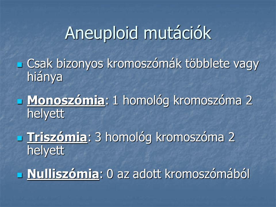 Aneuploid mutációk Csak bizonyos kromoszómák többlete vagy hiánya