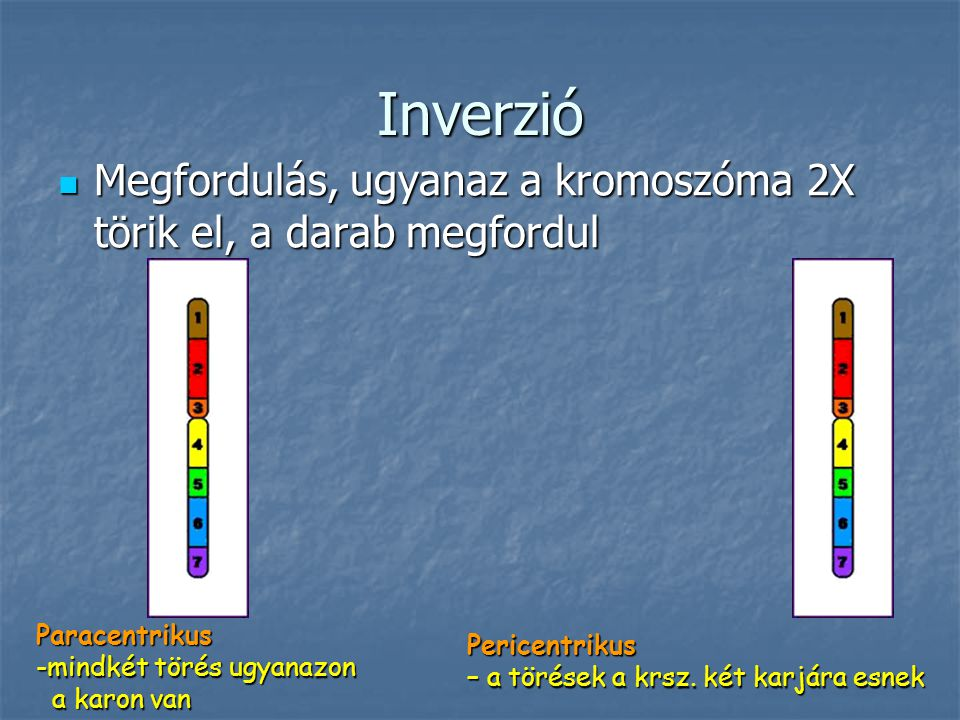 Inverzió Megfordulás, ugyanaz a kromoszóma 2X törik el, a darab megfordul. Paracentrikus. mindkét törés ugyanazon.
