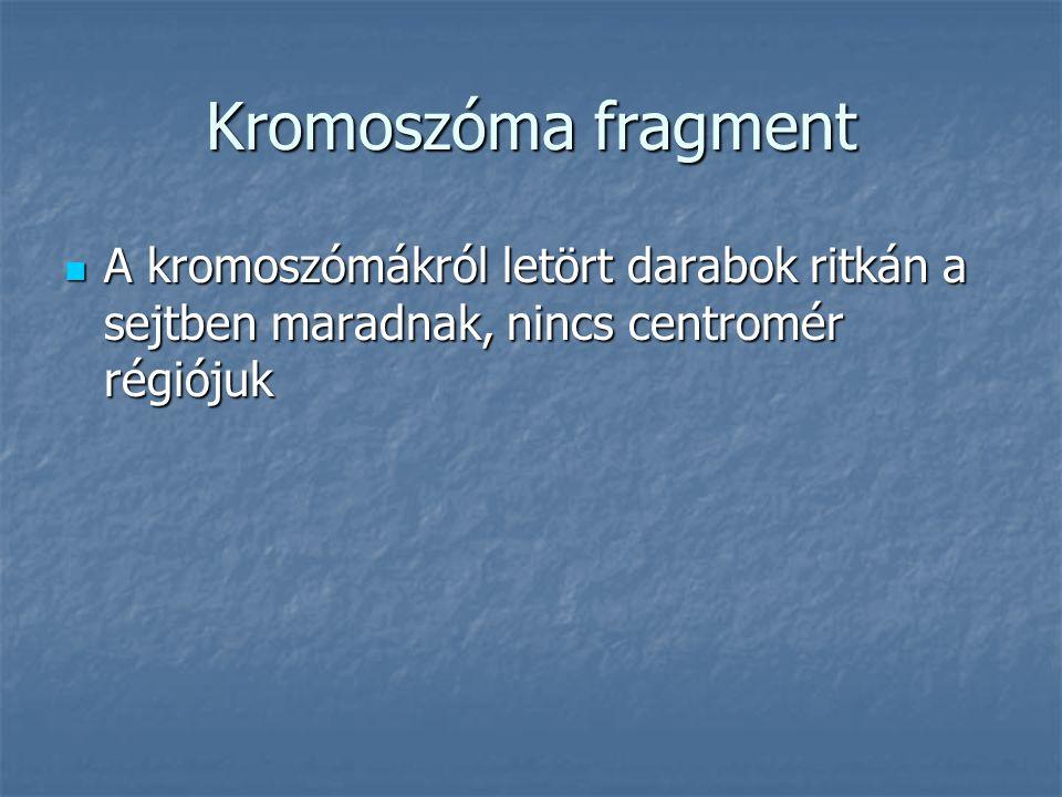Kromoszóma fragment A kromoszómákról letört darabok ritkán a sejtben maradnak, nincs centromér régiójuk.