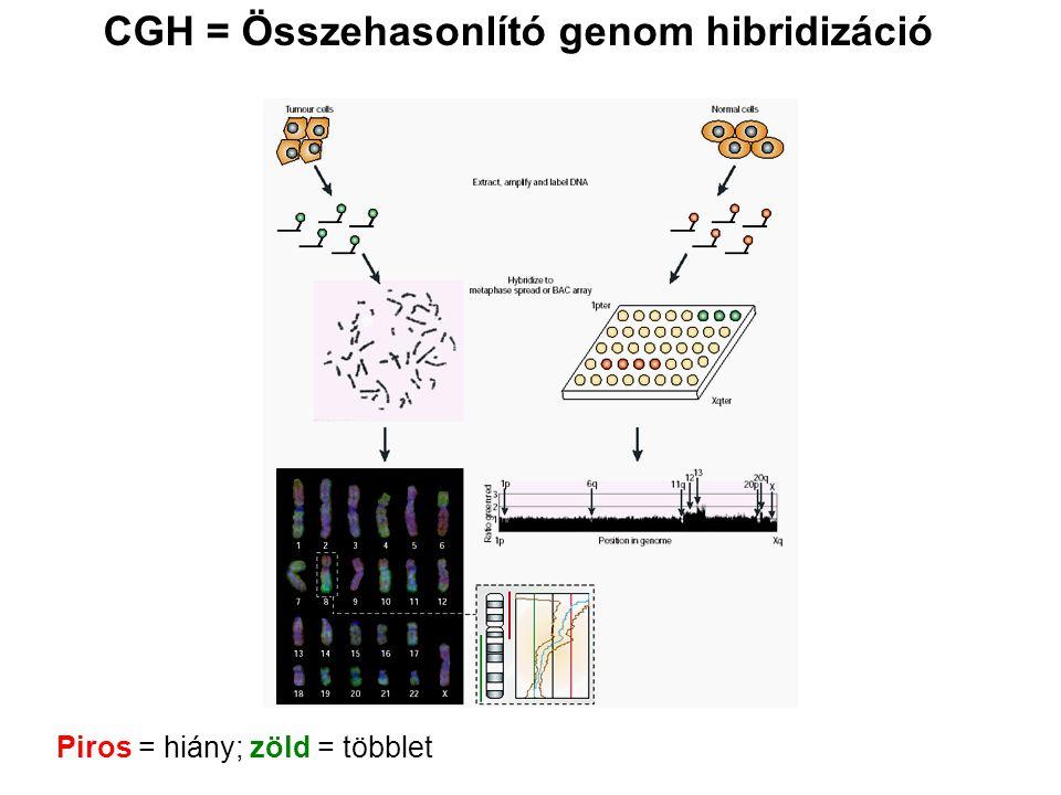 CGH = Összehasonlító genom hibridizáció