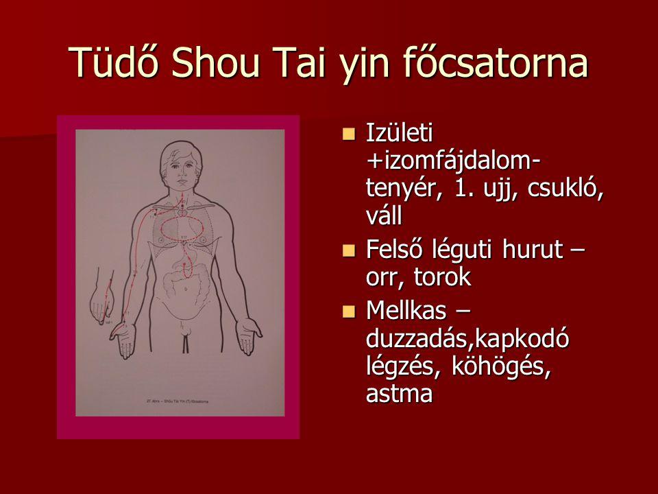 Tüdő Shou Tai yin főcsatorna