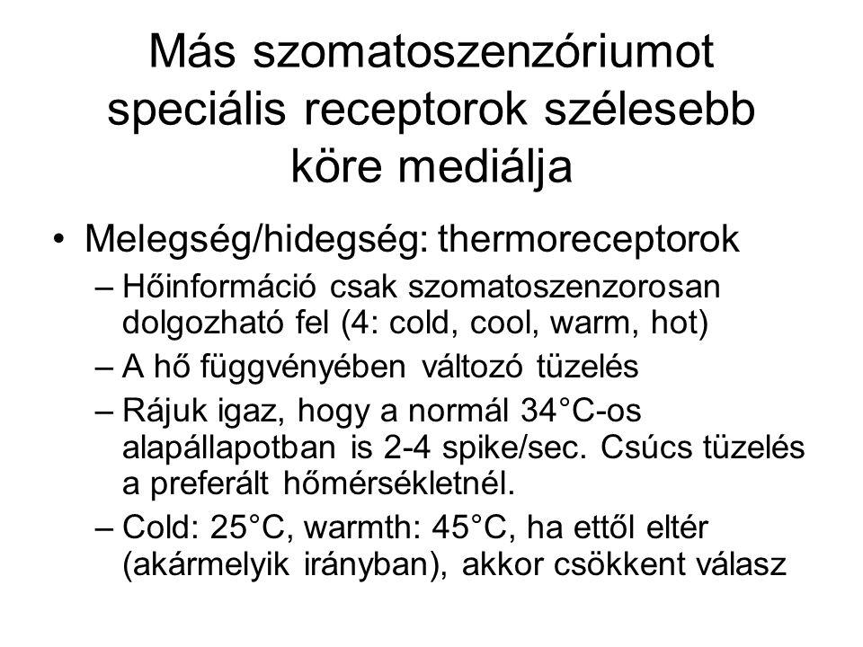 Más szomatoszenzóriumot speciális receptorok szélesebb köre mediálja