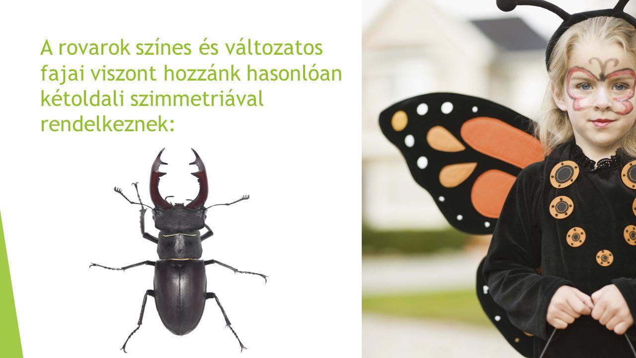 A rovarok színes és változatos fajai viszont hozzánk hasonlóan kétoldali szimmetriával rendelkeznek: