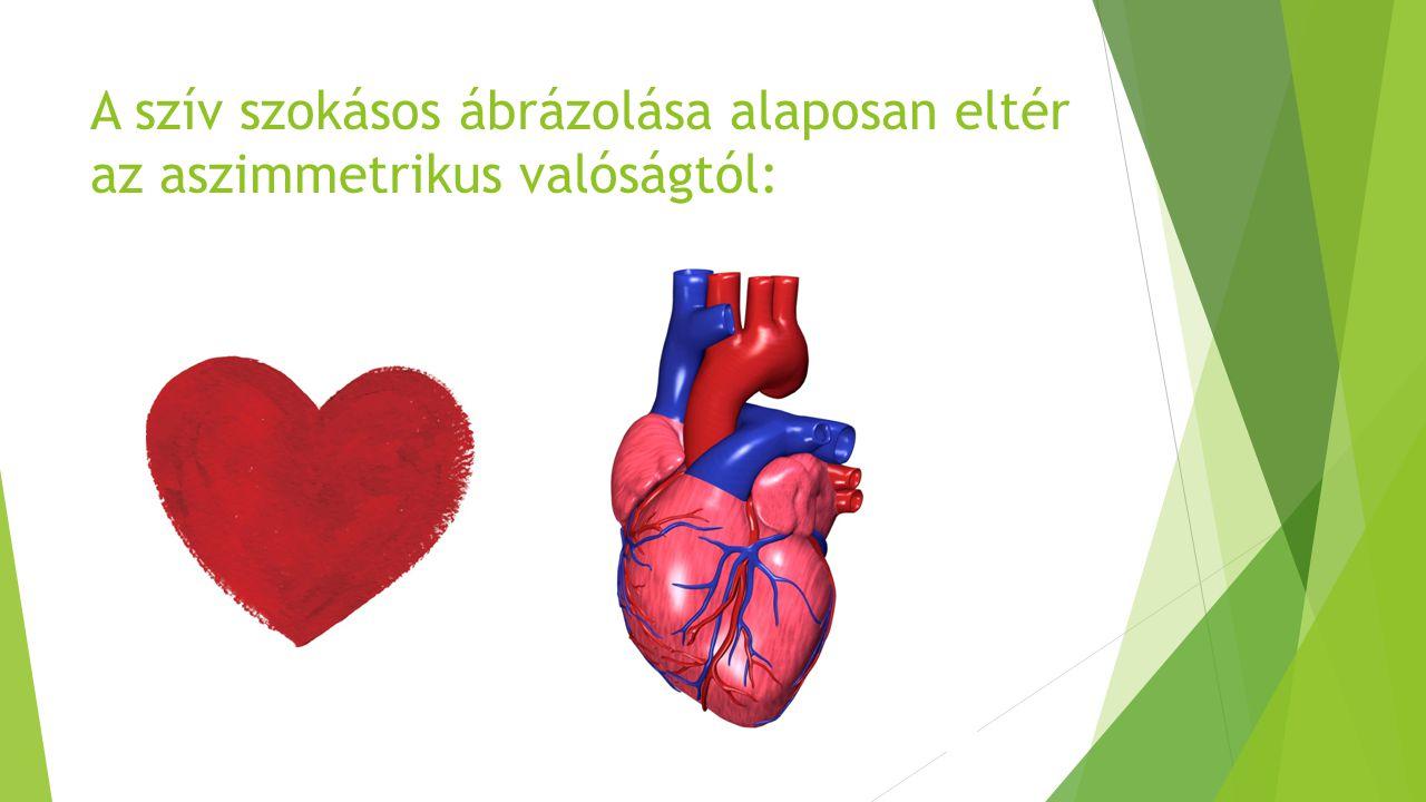 A szív szokásos ábrázolása alaposan eltér az aszimmetrikus valóságtól: