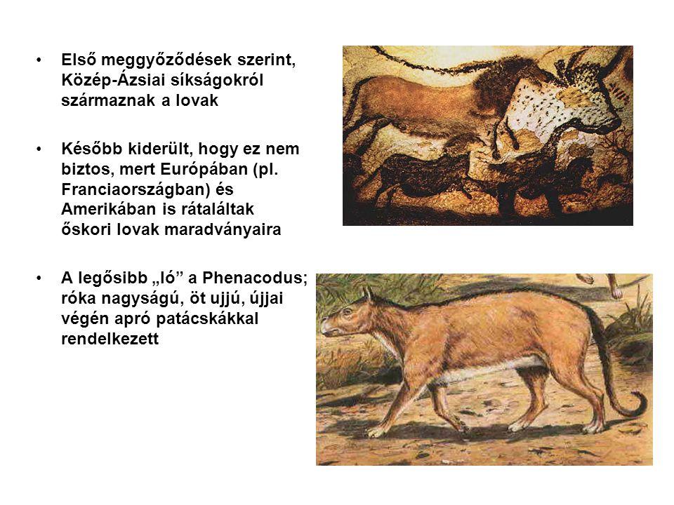 Első meggyőződések szerint, Közép-Ázsiai síkságokról származnak a lovak