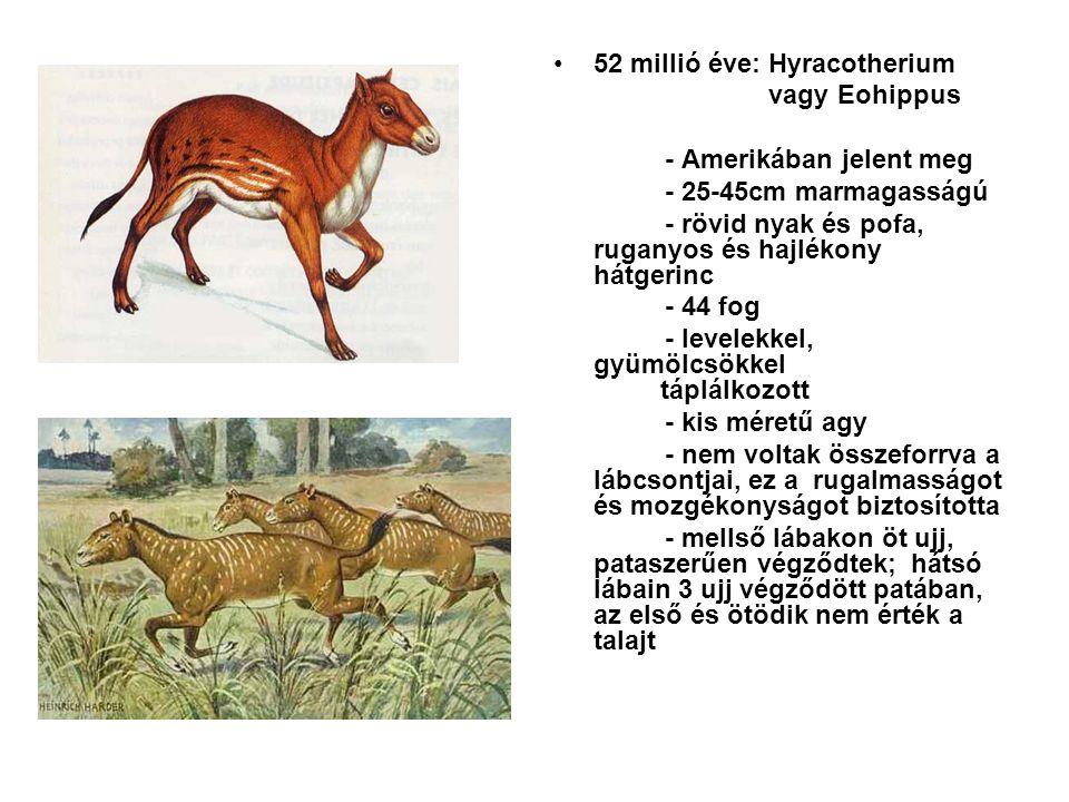 52 millió éve: Hyracotherium