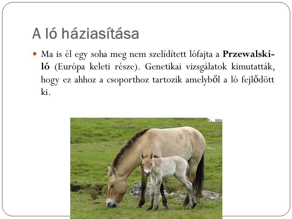 A ló háziasítása