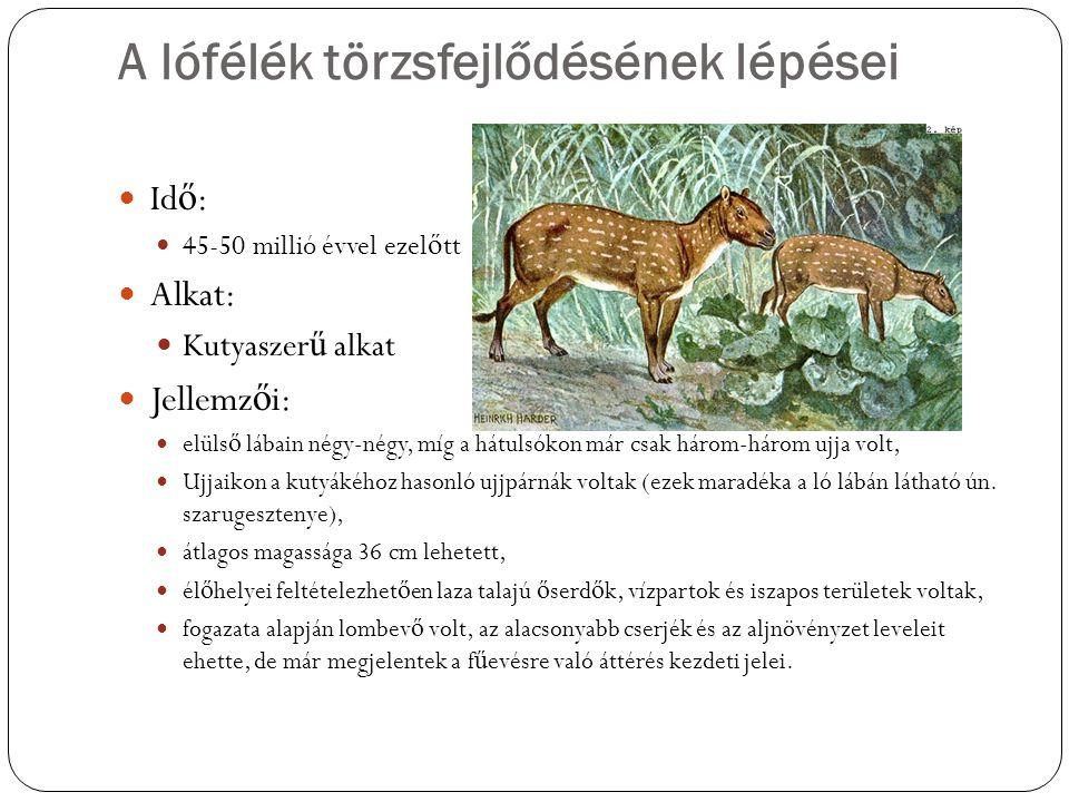 A lófélék törzsfejlődésének lépései