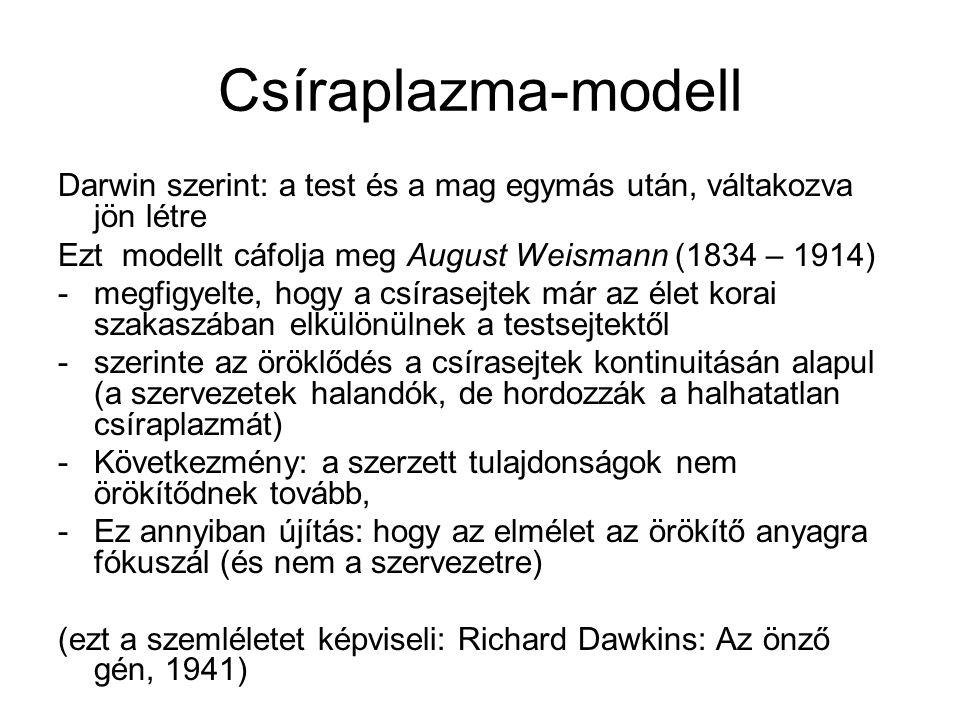 Csíraplazma-modell Darwin szerint: a test és a mag egymás után, váltakozva jön létre. Ezt modellt cáfolja meg August Weismann (1834 – 1914)