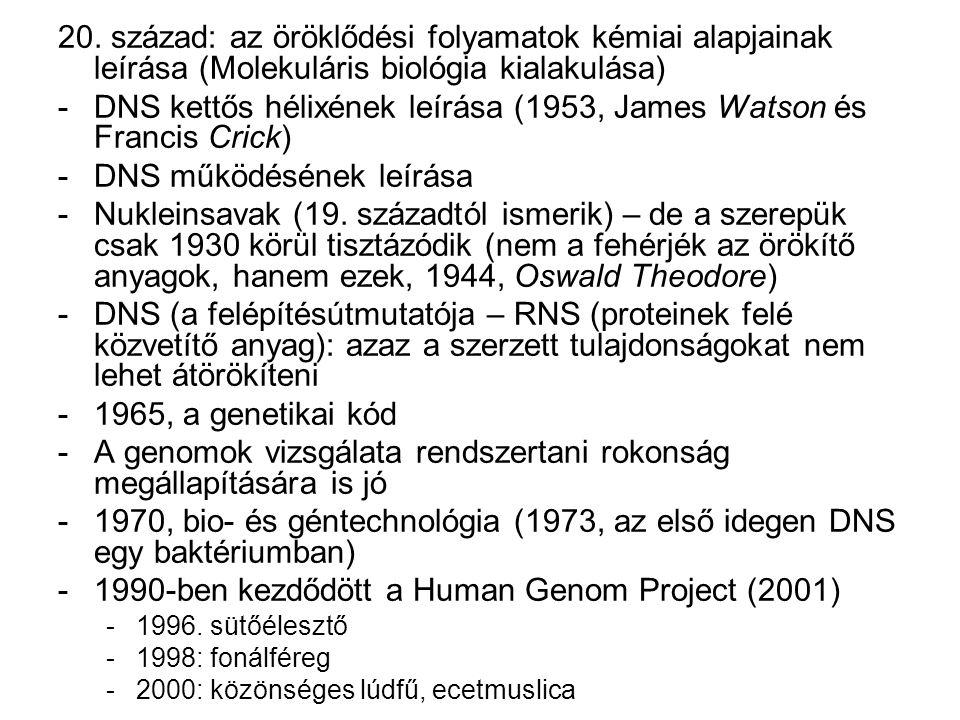 DNS kettős hélixének leírása (1953, James Watson és Francis Crick)