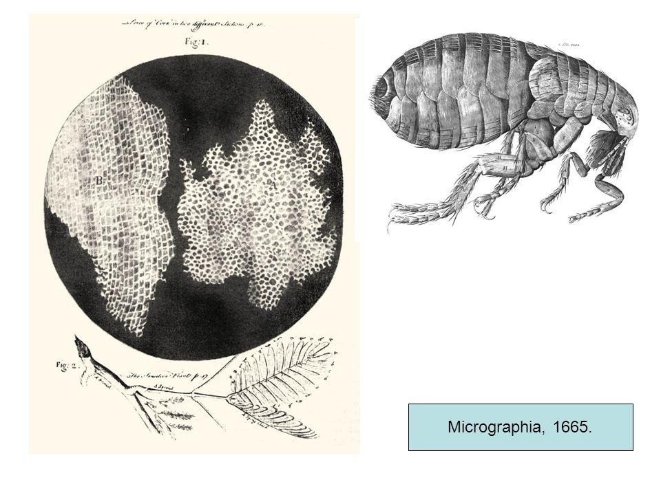 Micrographia, 1665.