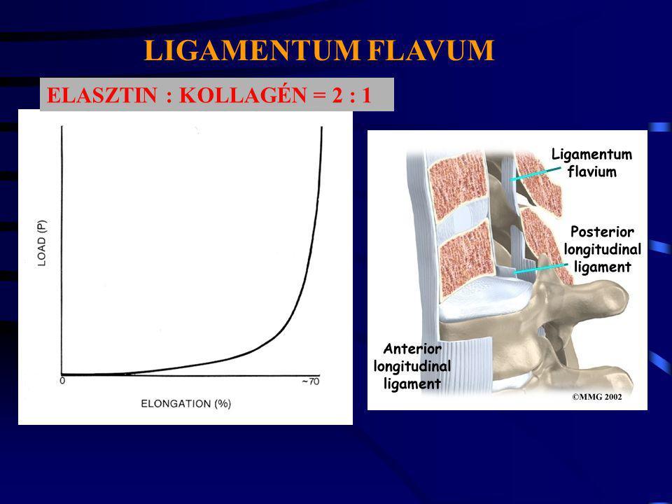LIGAMENTUM FLAVUM ELASZTIN : KOLLAGÉN = 2 : 1