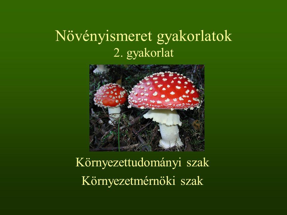 Növényismeret gyakorlatok 2. gyakorlat