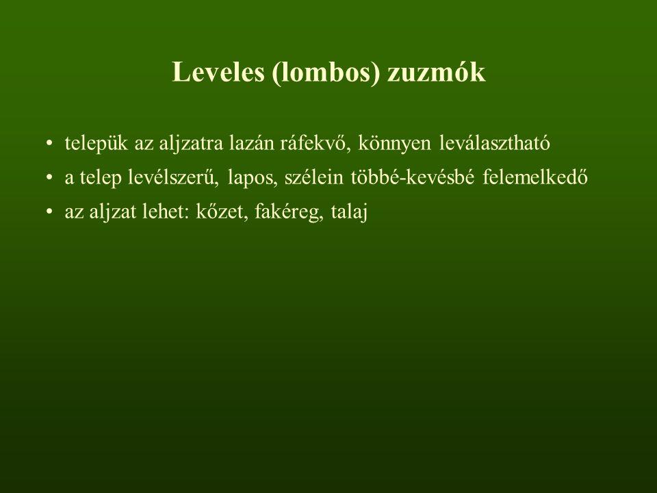 Leveles (lombos) zuzmók