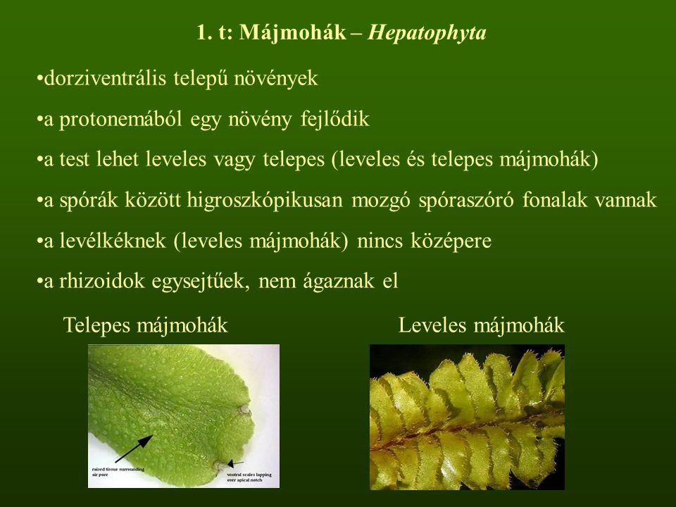 1. t: Májmohák – Hepatophyta