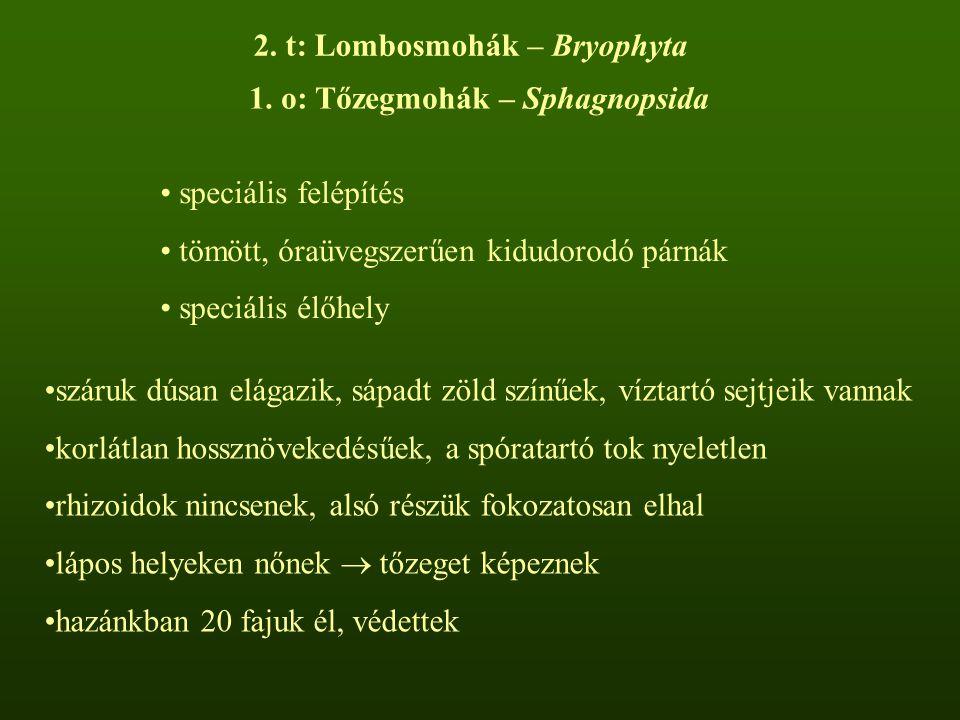 2. t: Lombosmohák – Bryophyta 1. o: Tőzegmohák – Sphagnopsida