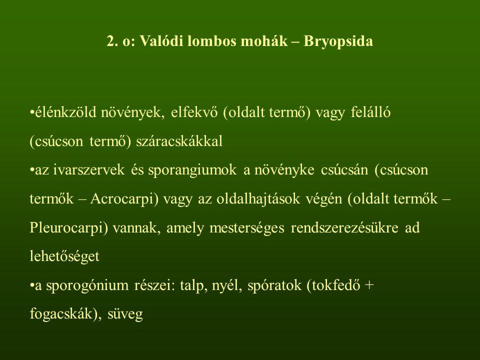 2. o: Valódi lombos mohák – Bryopsida