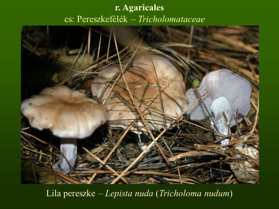 cs: Pereszkefélék – Tricholomataceae