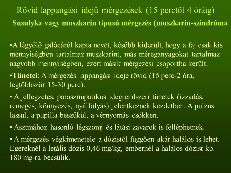 Rövid lappangási idejű mérgezések (15 perctől 4 óráig) Susulyka vagy muszkarin típusú mérgezés (muszkarin-szindróma
