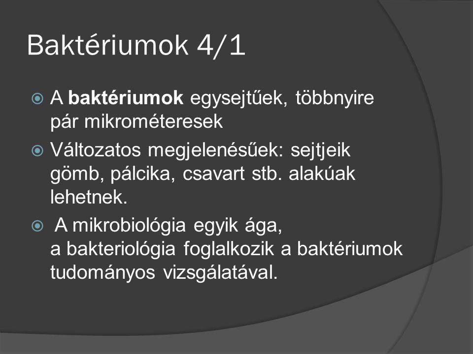 Baktériumok 4/1 A baktériumok egysejtűek, többnyire pár mikrométeresek