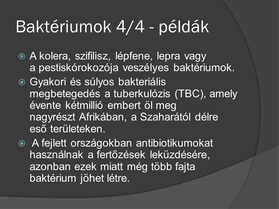 Baktériumok 4/4 - példák A kolera, szifilisz, lépfene, lepra vagy a pestiskórokozója veszélyes baktériumok.