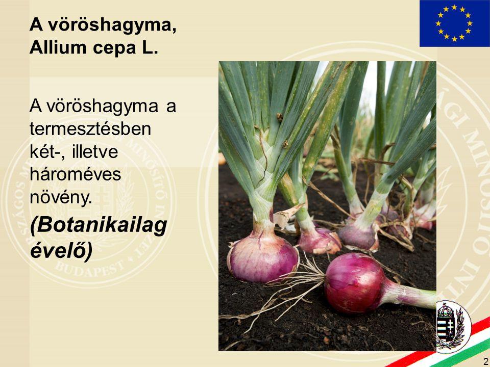 (Botanikailag évelő) A vöröshagyma, Allium cepa L.