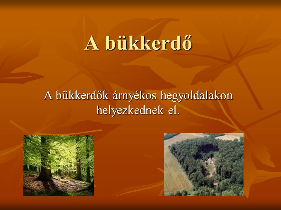 A bükkerdők árnyékos hegyoldalakon helyezkednek el.