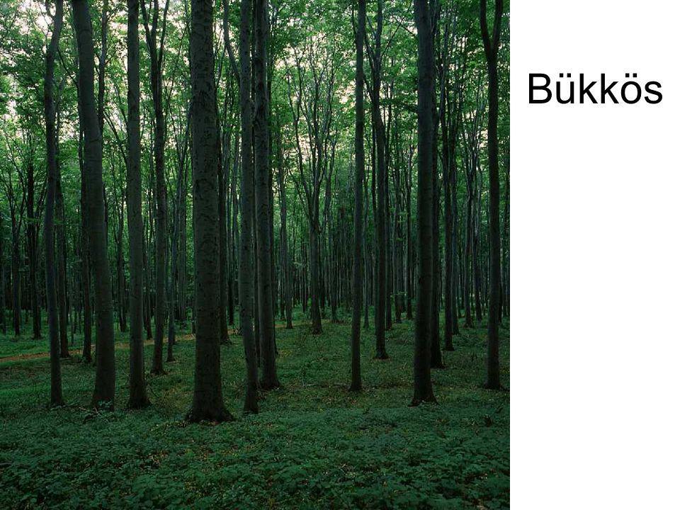 Bükkös Dunántúli bükkös I. (Farkasgyepű, 1993.) ELOH117