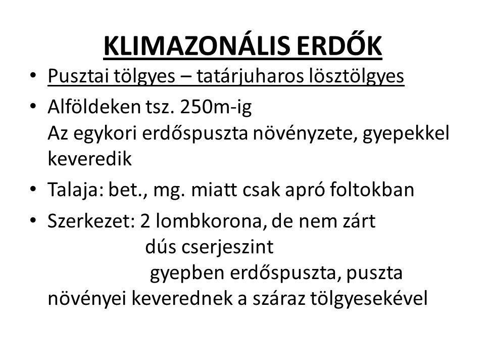 KLIMAZONÁLIS ERDŐK Pusztai tölgyes – tatárjuharos lösztölgyes