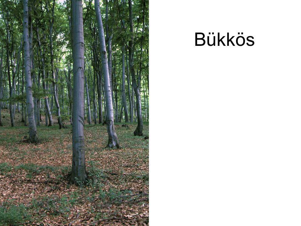 Bükkös Montán bükkös I. (Zempléni-hegység Nagyhuta környéke, 1996.) ELOH1000
