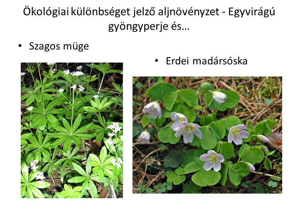 Ökológiai különbséget jelző aljnövényzet - Egyvirágú gyöngyperje és…