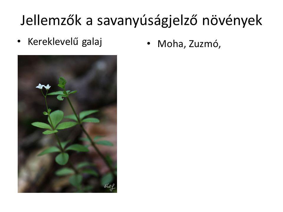 Jellemzők a savanyúságjelző növények