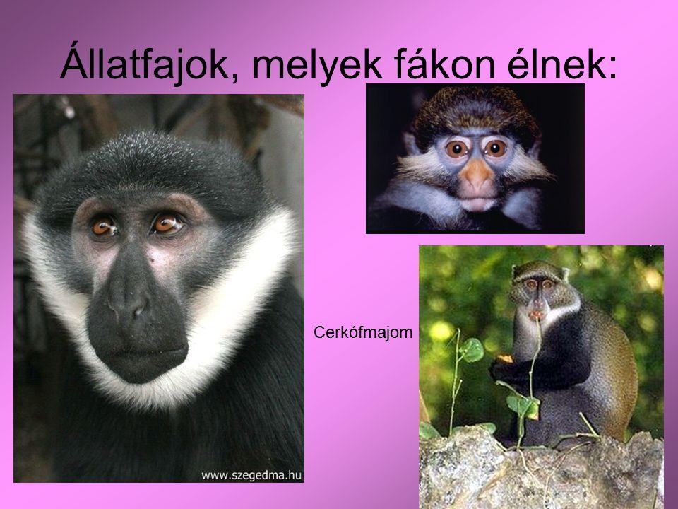 Állatfajok, melyek fákon élnek: