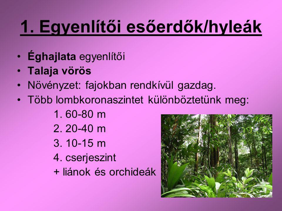 1. Egyenlítői esőerdők/hyleák